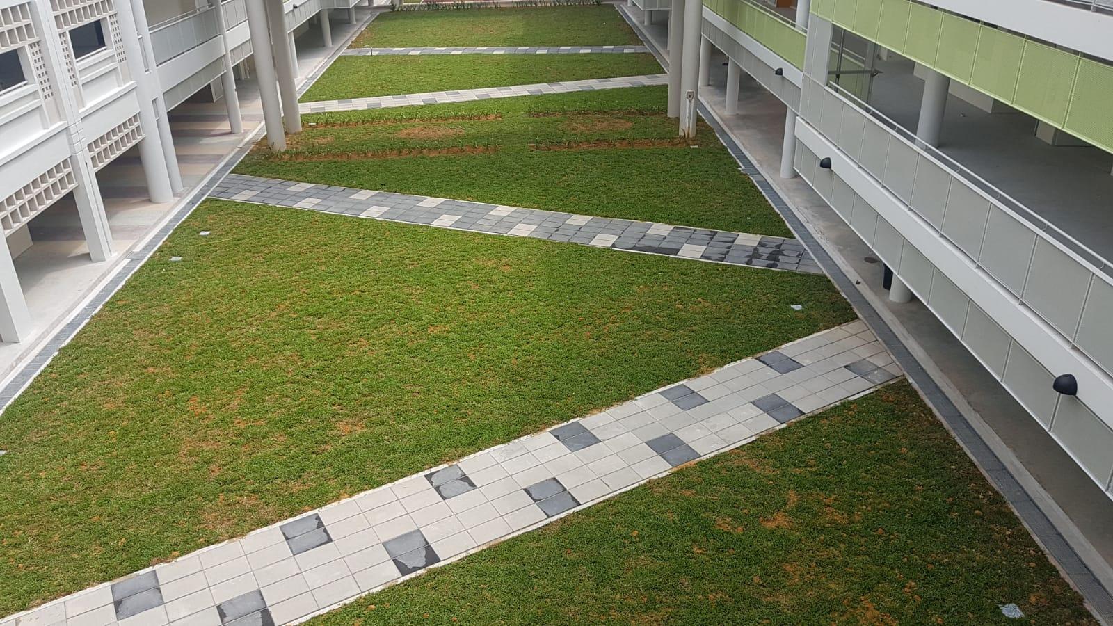 Aerial Shot of Footpath at School